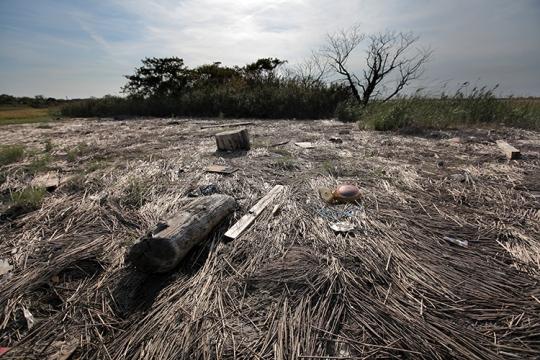 Desolate Marshlands