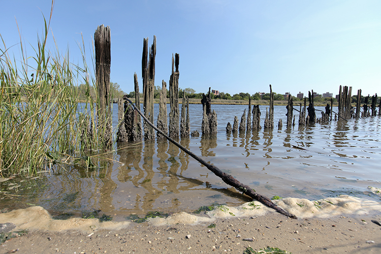 Rotting pilings show that this land was once used for something.