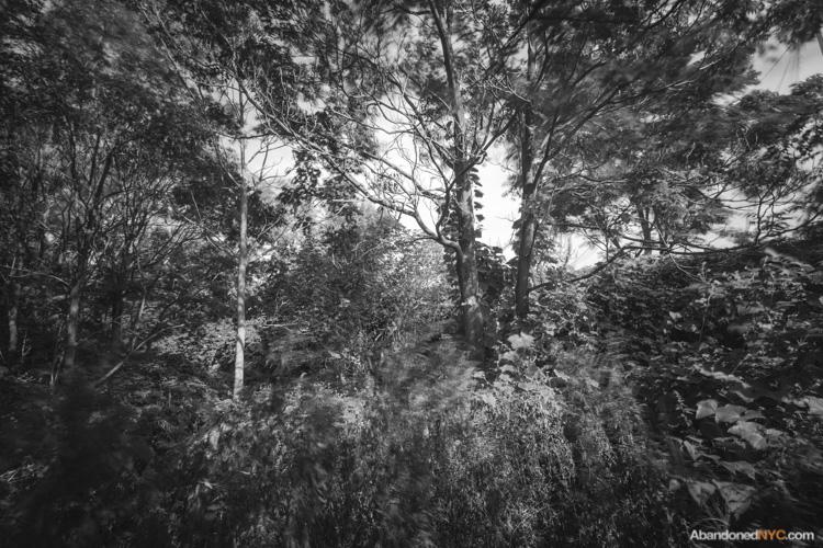 Inside a wooded section behind the baseball fields of Calvert Vaux Park.