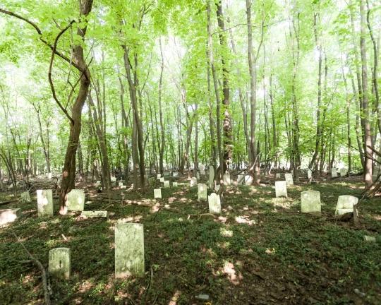 Will Ellis_Old Dutch Cemetery_AbandonedNYC-10
